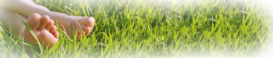 Home Banner 2